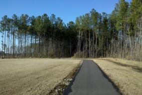 Paved path on the edge of forest
