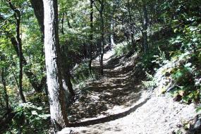 Uphill portion of trail in the woods