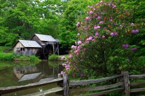 Mabry Mill in bloom
