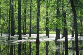 Swamp at Musgrove Mill