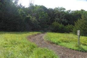 Mulched path through field