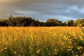 Golden prairie at sunset