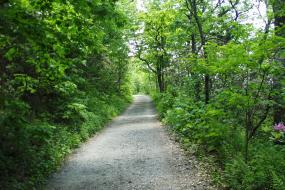 Gravel portion of trail near trail head surrounded by green vegetation