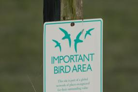 Audubon important bird area sign with a bird on top