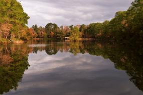 Autumn foliage reflecting in pond