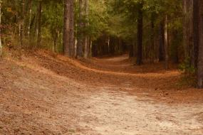 Sandy path through the pines