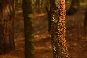 Orange fungus growing on the trunk of a tree