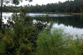 Forest surrounding the lake