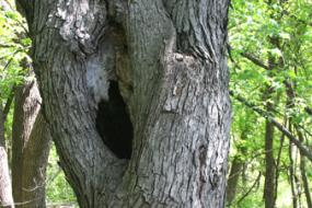 Hole in the trunk of a tree