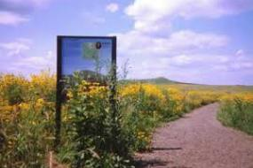 Sign beside trail in a field of yellow flowers