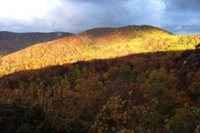 Sunlight illuminating fall foliage in the mountains