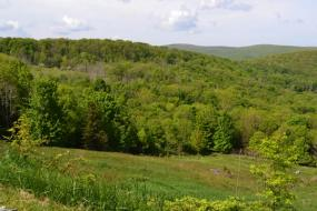 green field surrounded by trees and hills