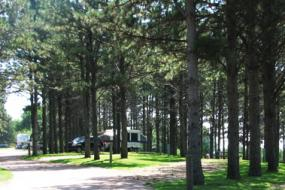Trees at Campground